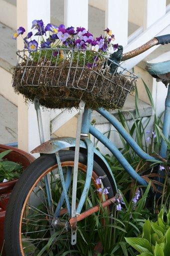 Vintage bike with pansies