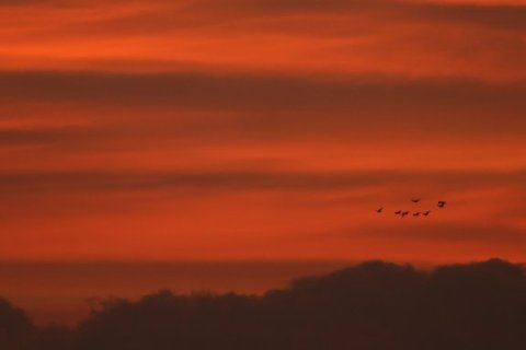 Birds on the wing over the Columbia River