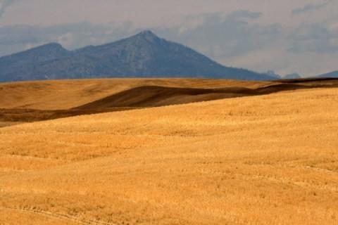 Harvested wheat field in Eastern Washington