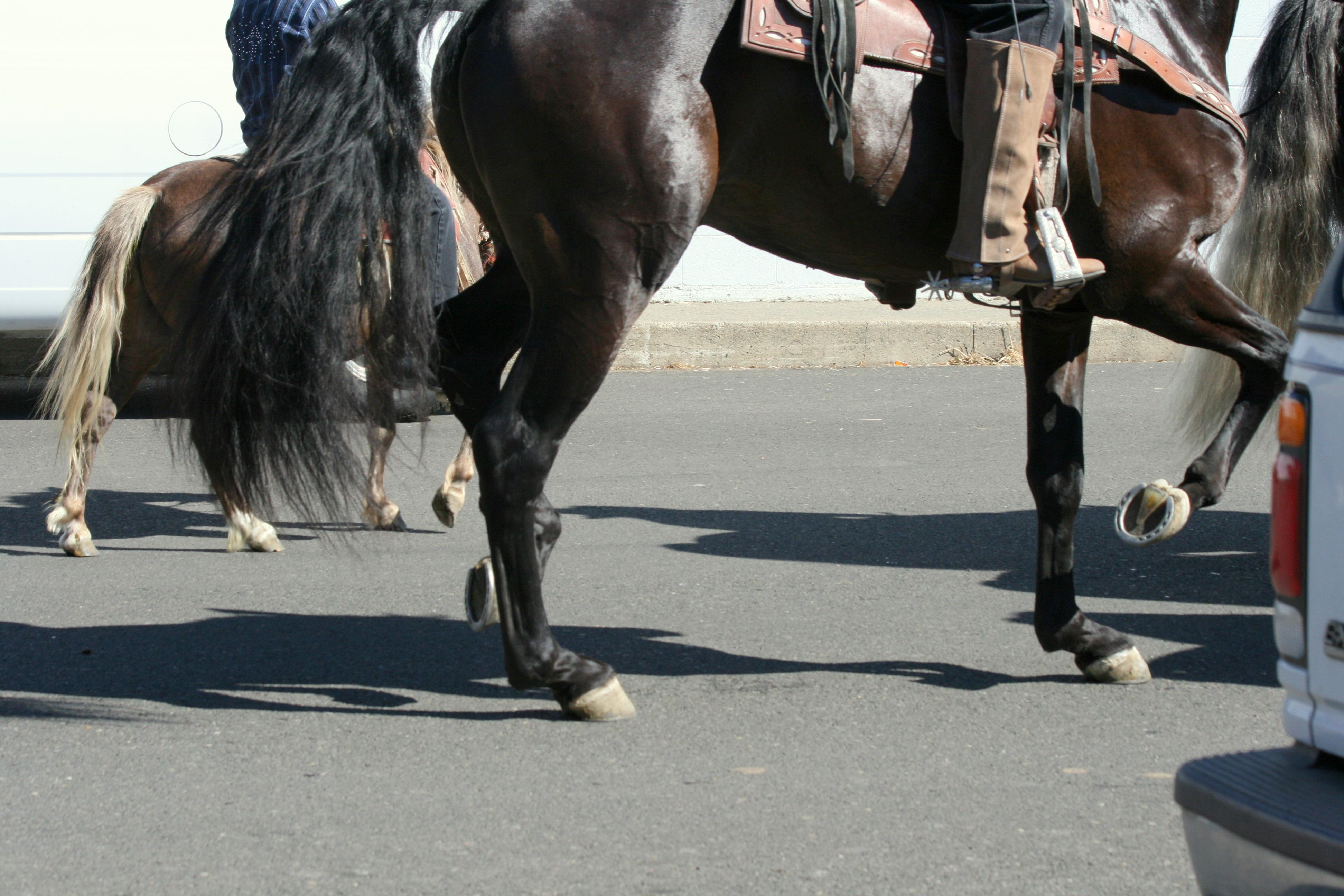 картинки конь танцует раскрасках