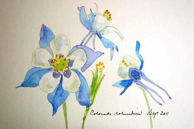 Columbine Flower Line Drawing : Columbine rosemary s