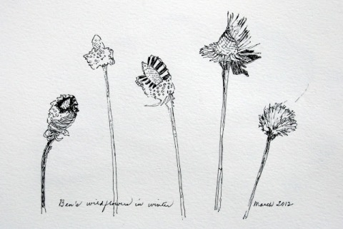 Ink sketch of Ben's wildflowers in winter