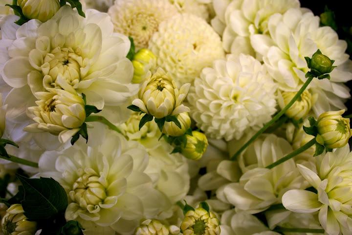 Seattle Wholesale Growers Market Rosemarys Blog
