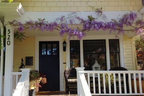 Wisteria vine framing a porch