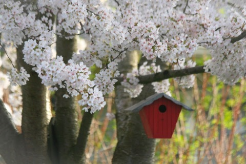 Red birdhouse with blossoms