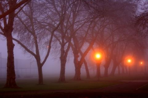 A foggy, rainy December morning at Green Lake