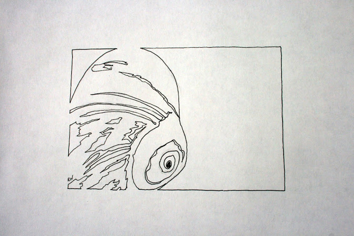 Contour Line Drawing Shell : Contour line drawings rosemary s