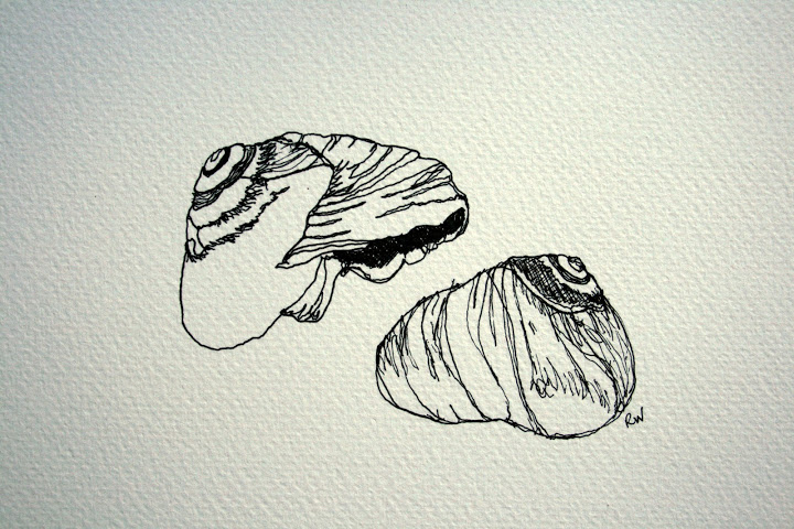 Contour Line Drawing Shell : Moved permanently