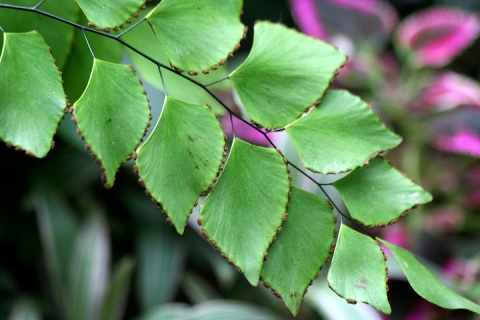 Delicate beaded edges grace these cascading leaves