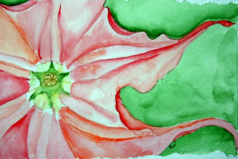 Watercolor sketch of trumpet flower