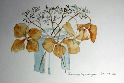 Finished watercolor sketch of lace cap hydrangea in winter