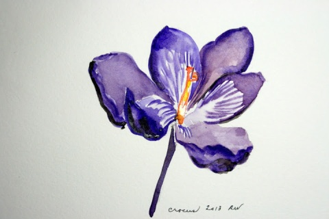 My watercolor sketch of a single crocus bloom