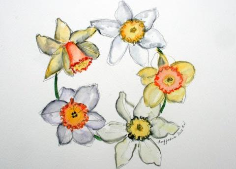 Watercolor sketch of daffodils