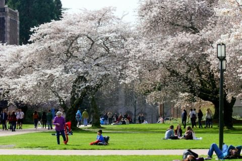 Sunshine + cherry blossoms = springtime spectacle