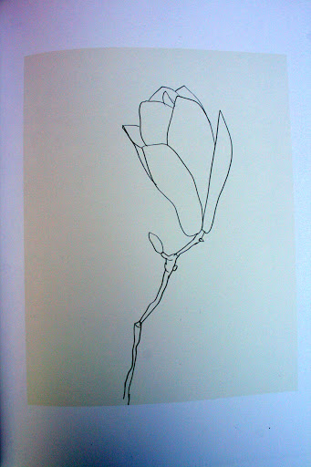 From Plant Drawings by Ellsworth Kelly