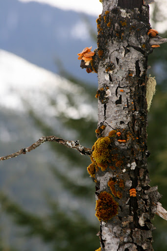 Tree trunk with moss, lichen and fungi