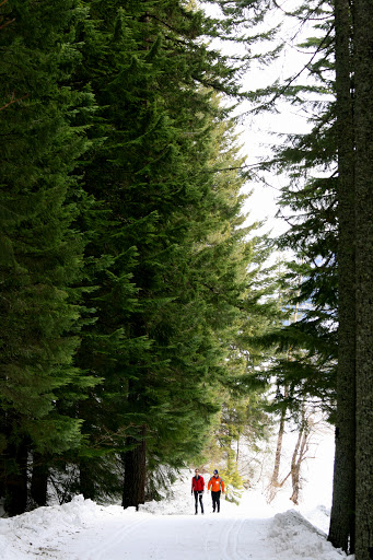 Cold Creek Trail at Snoqualmie Pass in the Cascade Mountains