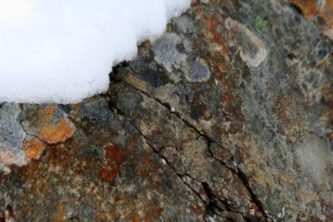 Lichen on a cracked boulder