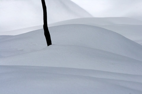 Something restful about the soft curves of these snowbanks