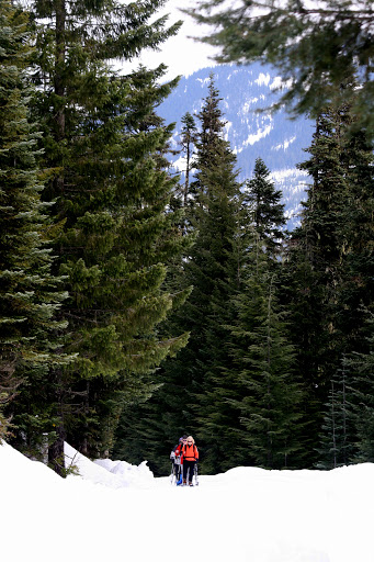 Snowshoers on the trail