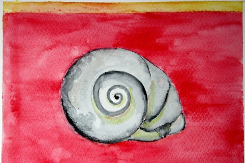 Moon Snail Shell # 89, watercolor sketch with red