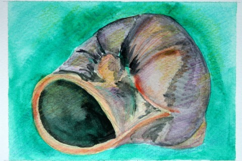 Moon Snail Shell # 90, watercolor sketch