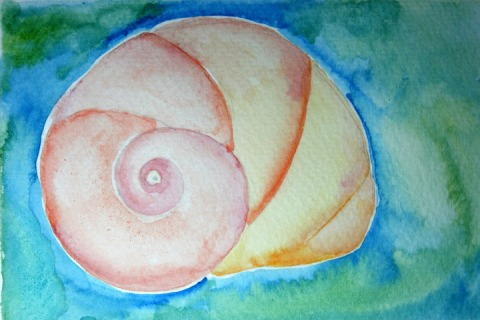 Moon Snail Shell # 92, watercolor sketch
