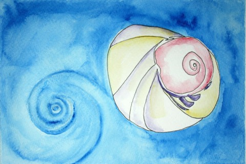 Moon Snail Shell # 100, ink sketch with watercolor