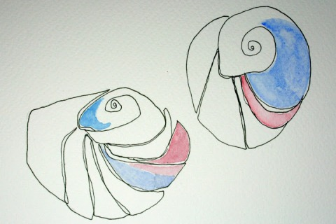 Moon Snail Shells # 67 & 68, ink sketches with watercolor washes