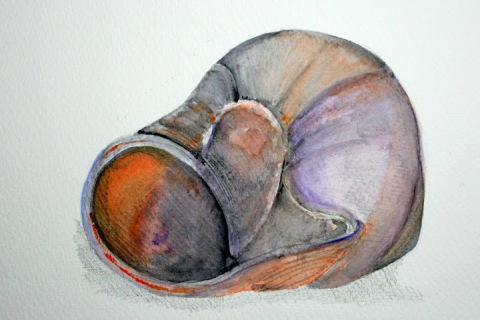 Moon Snail Shell # 80, pencil and watercolor sketch (reprise of shell # 59)