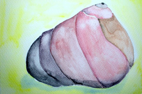 Moon Snail Shell # 82m watercolor sketch