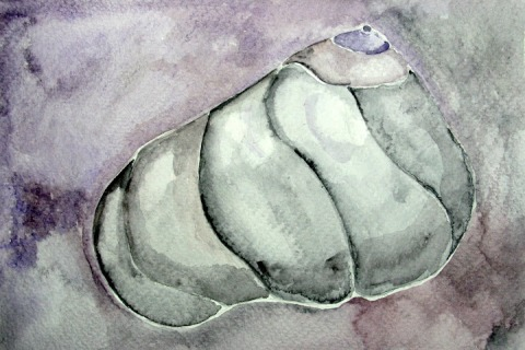 Moon Snail Shell # 83, watercolor sketch