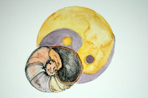 Moon Snail Shell # 89, ink and watercolor sketch