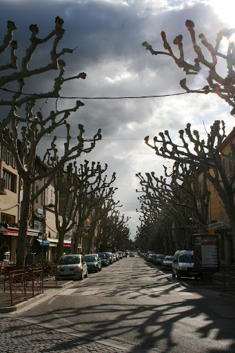 The Boulevard Gassendi in Digne, lined by trees with their branches lopped off