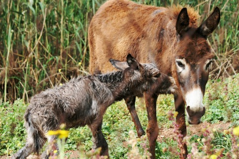 We saw this baby donkey just moments after its birth