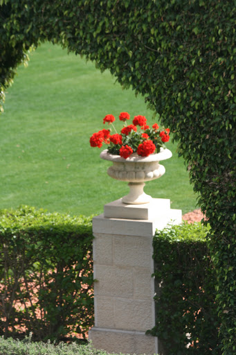 Sculpted hedges framed red geraniums