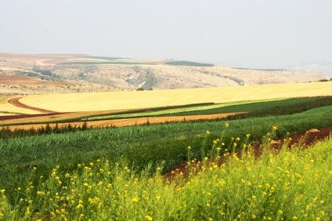 Kibbutz fields