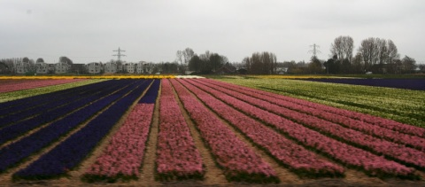 View of fields near Lisse from the tour bus window