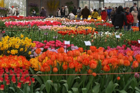 Indoors at the Willem-Alexander pavilion the display beds were in bloom for all to enjoy.