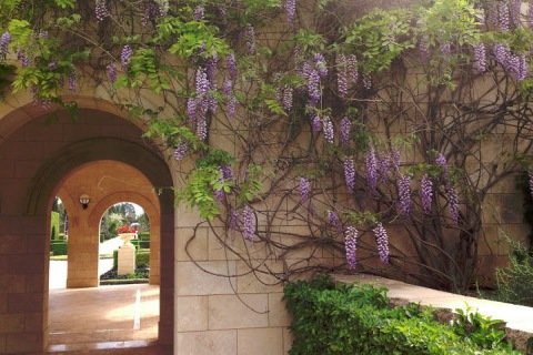 Wisteria graced the entrance