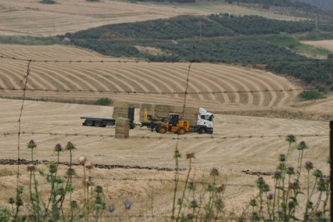 Harvesting hay on the kibbutz