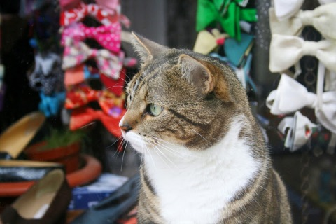 Amsterdam cat with cool bow-ties