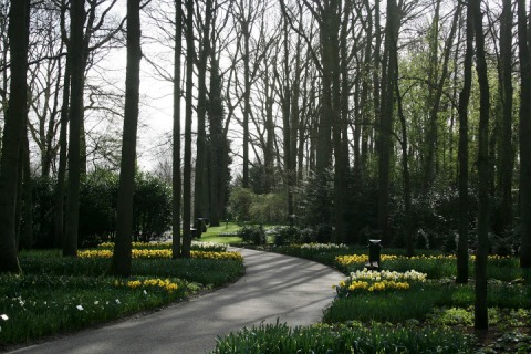 Early morning sun through the leafless trees, Keukenhof