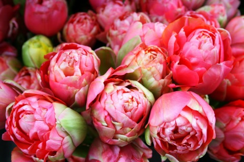 Peonies in the Marches aux Fleurs