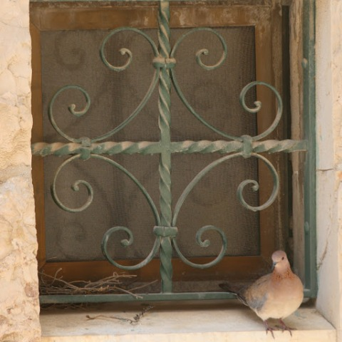 Dove at the back of the church at Gethsemane