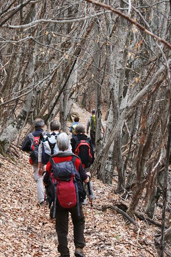 Trail through a beech forest