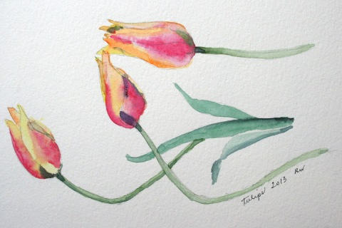Watercolor sketch of tulips