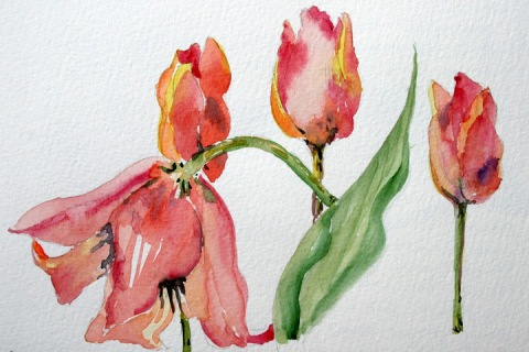 Another watercolor sketch of tulips