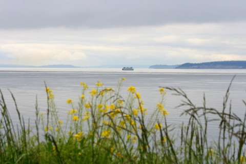 Ferry viewed from the bluff at Ebey's Landing