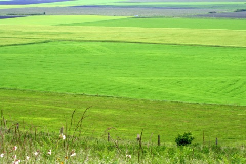 View of farmland from the bluff; so green